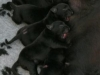 nina-pups-dag-1-025
